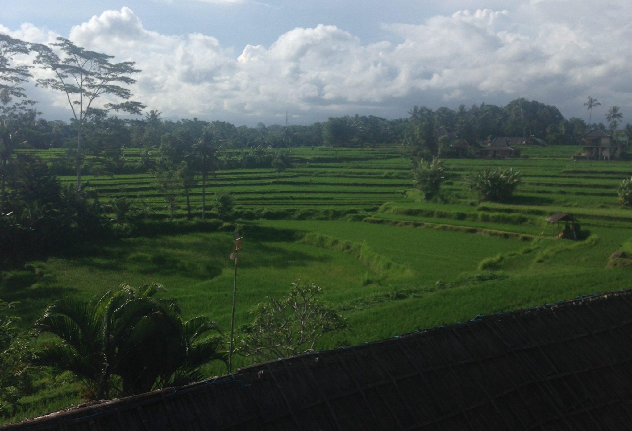 Memories from Bali 2