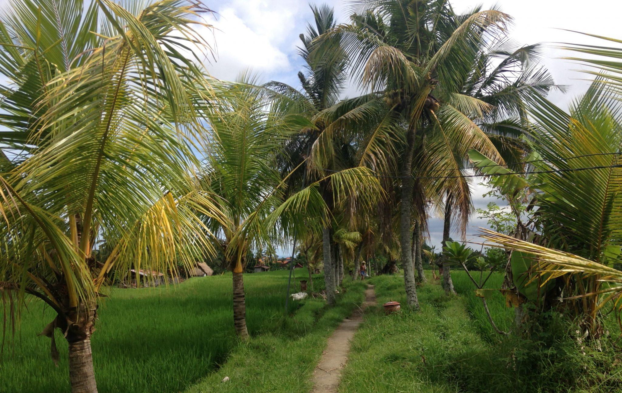 Memories from Bali 1